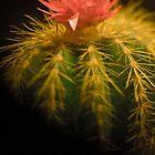 Cactus Macro by hedidwhat