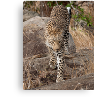Female Leopard Canvas Print