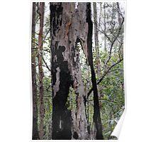 old bushfire victim Poster
