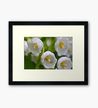 """Lily of the Valley ..."" Framed Print"