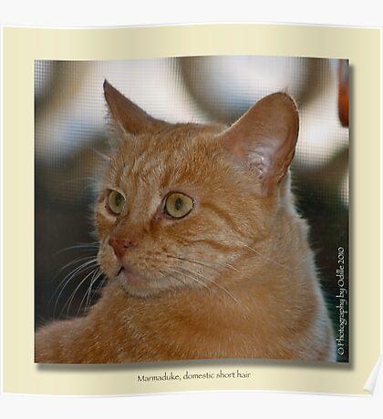 Marmaduke the Marmalade Cat  Poster