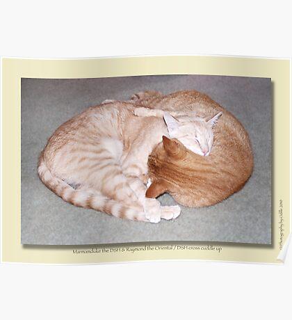 Cat calendar image #2 Togetherness!   Poster