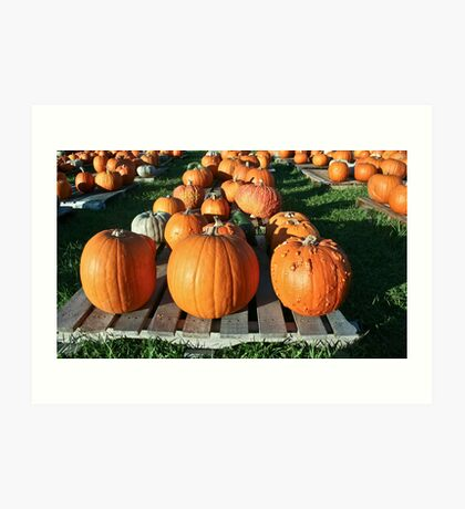 Pick a Pumpkin any Pumpkin! Art Print