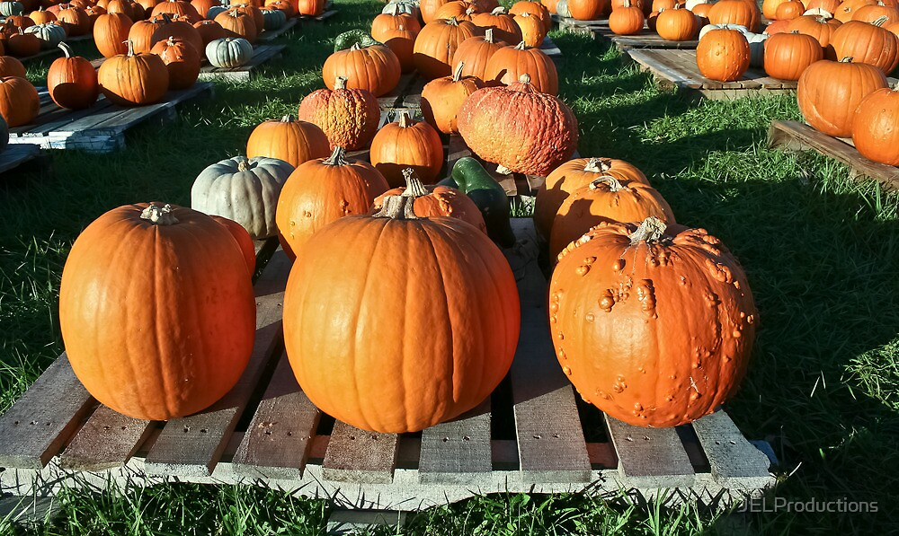 Pick a Pumpkin any Pumpkin! by JELProductions