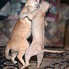 A Caboodle of Cats by Odille Esmonde-Morgan