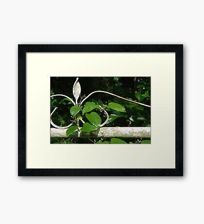 Gate and Vine Framed Print