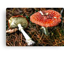 Part of a Fairy Ring Canvas Print