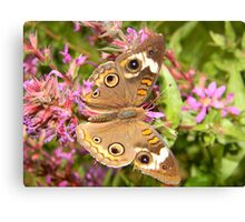 Cruising the flower patch. Canvas Print