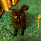 black cat by catnip addict manor