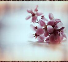 Blossom II by fourthangel
