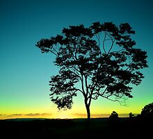 Technicolour Tree by Natsky