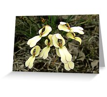 Cow Kicks, Stylidium schoenoides Greeting Card