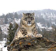 Snow Leopard 9 by mrshutterbug