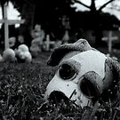 Rest in Peace I by Kutay Photography