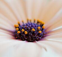 Purple Center by Kellie Metcalf