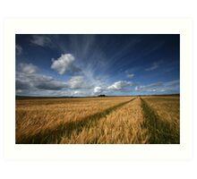 Barley field, Caithness, Scotland Art Print