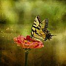 Swallowtail on Zinnia by Sandy Keeton