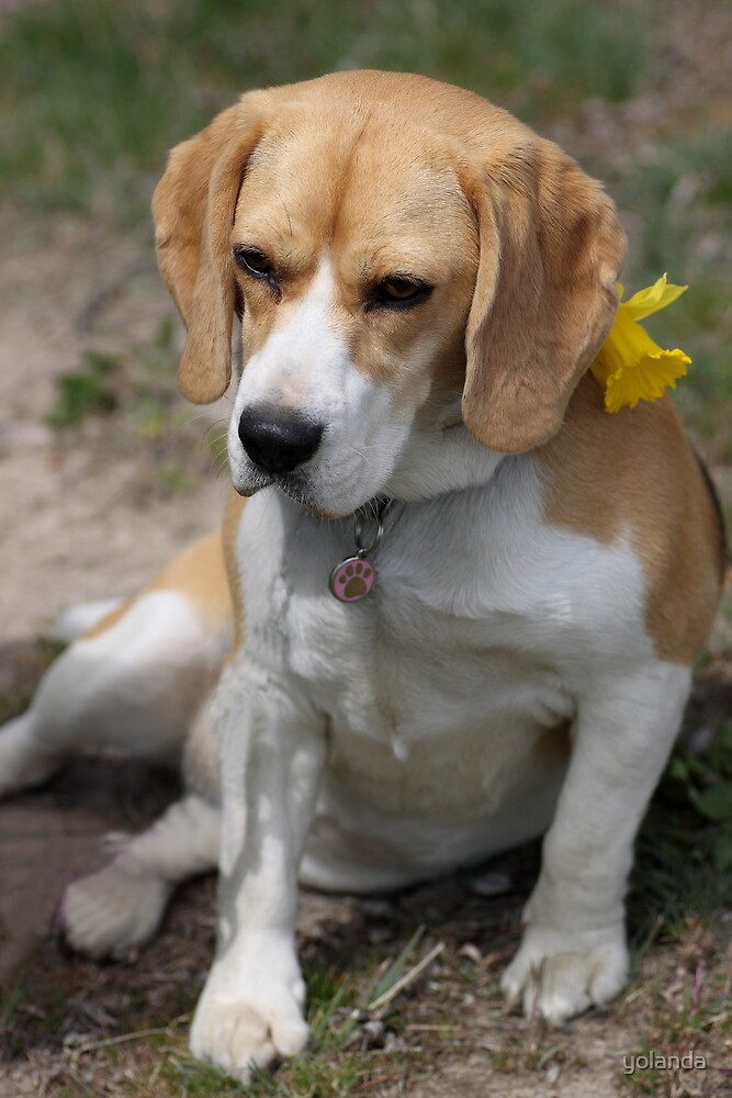 Daffodil Doggy by yolanda