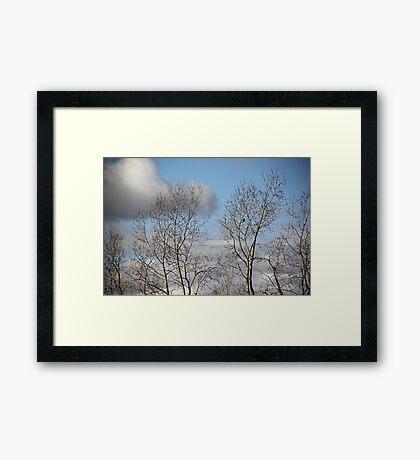 One Little Blackbird Framed Print