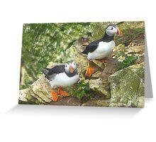 Puffins on Bempton Cliffs. Greeting Card