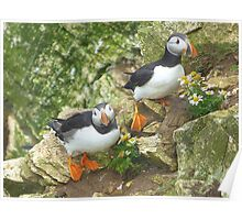 Puffins on Bempton Cliffs. Poster