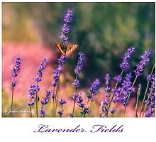 Lavender Fields - 1 by jules572