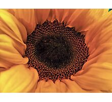 Sunflower - Macro Close Up Photographic Print