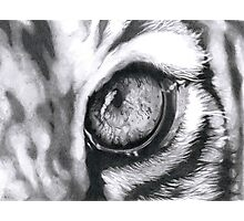 Tiger's eye - Closeup Photographic Print