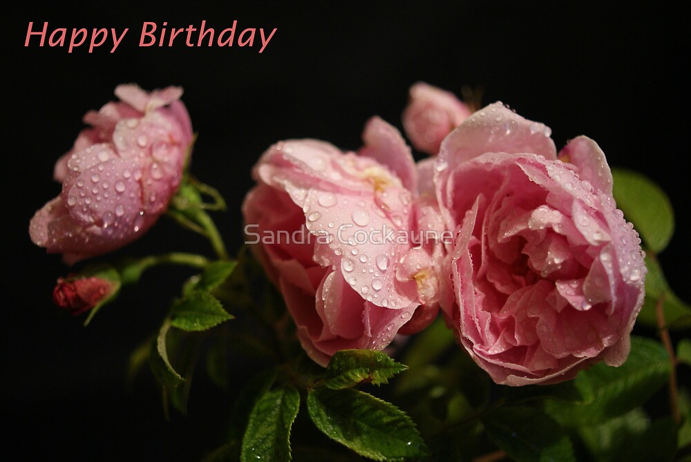 Happy Birthday Card ~ Roses ~ by Sandra Cockayne