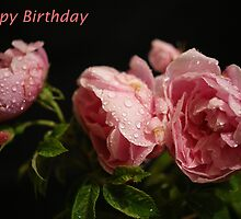 Happy Birthday Card ~ Roses ~ by Sandra Cockayne