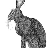 Sitting Rabbit by Schmaise