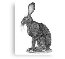 Sitting Rabbit Canvas Print