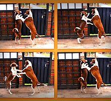 Do the dog waltz by Tarolino