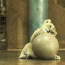 African Lion Cub by starbucksgirl26