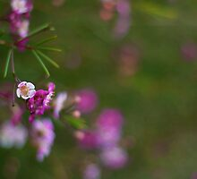 Simplicity is Devine by Hannah McLaren