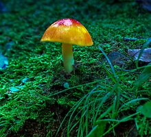 Pennsylvania Shroom by MattGranz