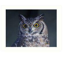Horned Owl Close Up Art Print