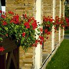 Flowers on the windowsill by Dfilyagin