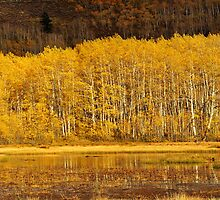 Aspens, Midway Reservoir, Utah by Ryan Houston