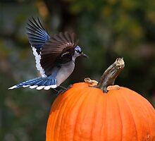 Harvest Time by Gary Fairhead