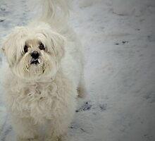 Snow Dog - Blizzard by Brittani Getch