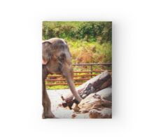 Survival of the fittest Hardcover Journal