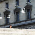 Paris Love Birds by Gemma  Williams