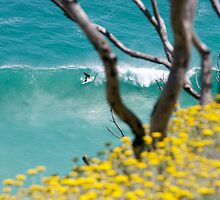 Springtime Surfing  by Neil  Bradfield