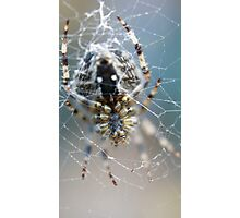 In the Web Photographic Print