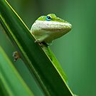 Anole checking me out by Photography by TJ Baccari