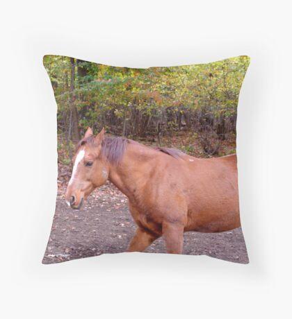 Pacing Throw Pillow
