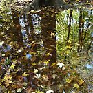 Autumn Puddle Reflections#12 by linmarie