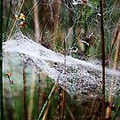 Cobweb in the woods  by gracetalking