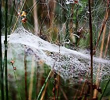 Cobweb in the woods  by gracetalking
